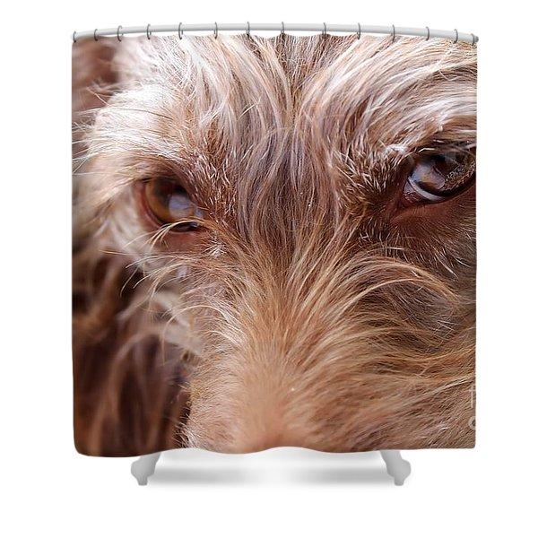 Dog Stare Shower Curtain