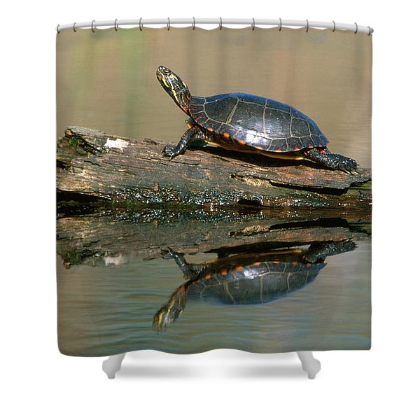 Eastern Painted Turtle Shower Curtain