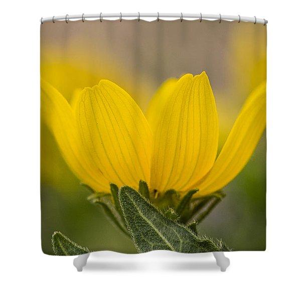 Engelmann Daisy Shower Curtain