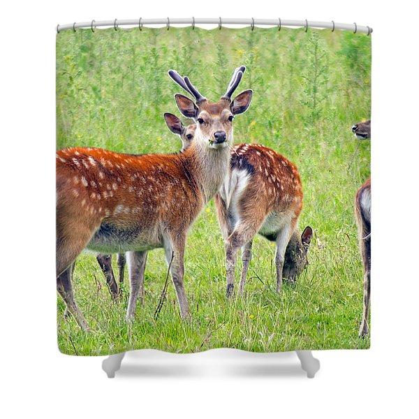 Fallow Deer Shower Curtain