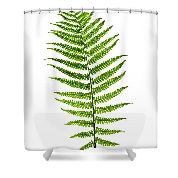 Fern Leaf Shower Curtain