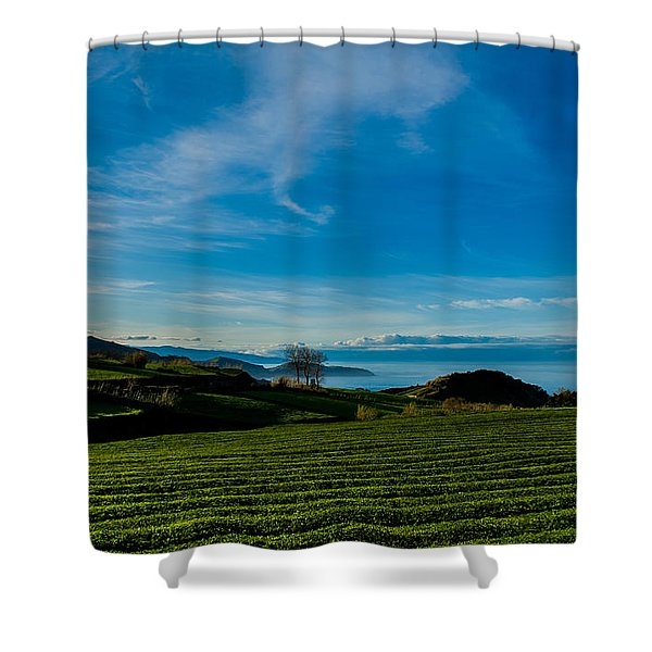Field Of Tea Shower Curtain