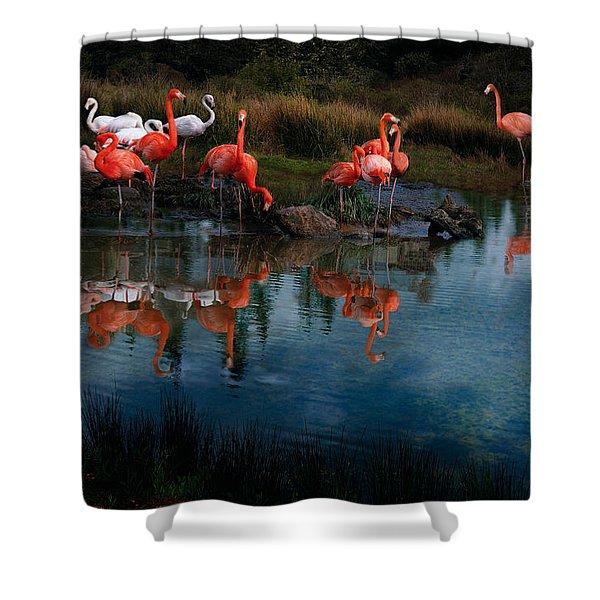 Flamingo Convention Shower Curtain
