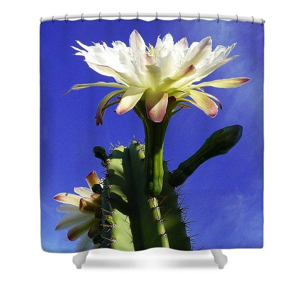 Flowering Cactus 3 Shower Curtain