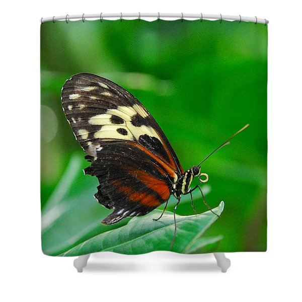 D5l15 Butterfly At Franklin Park Conservatory Shower Curtain