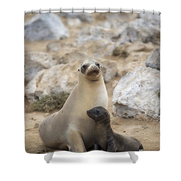 Galapagos Sea Lion And Pup Champion Shower Curtain