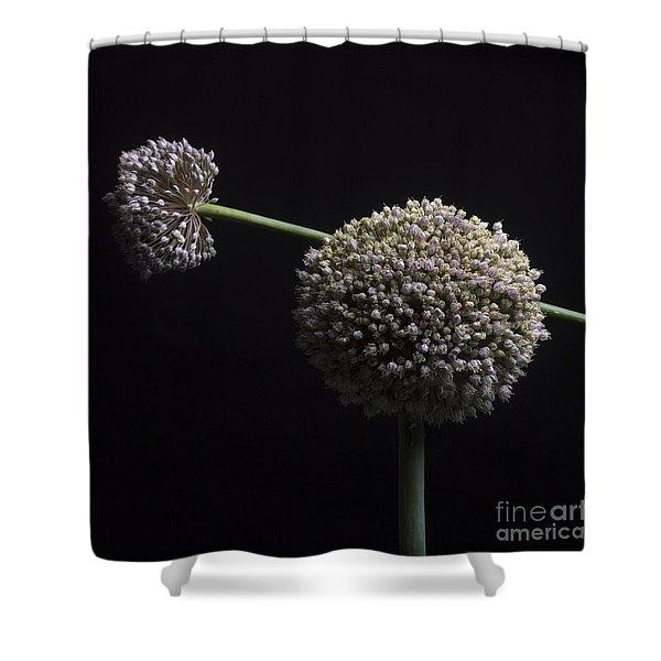 Garlic Flowers. Allium. Shower Curtain