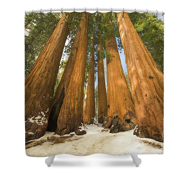 Giant Sequoias Sequoia N P Shower Curtain