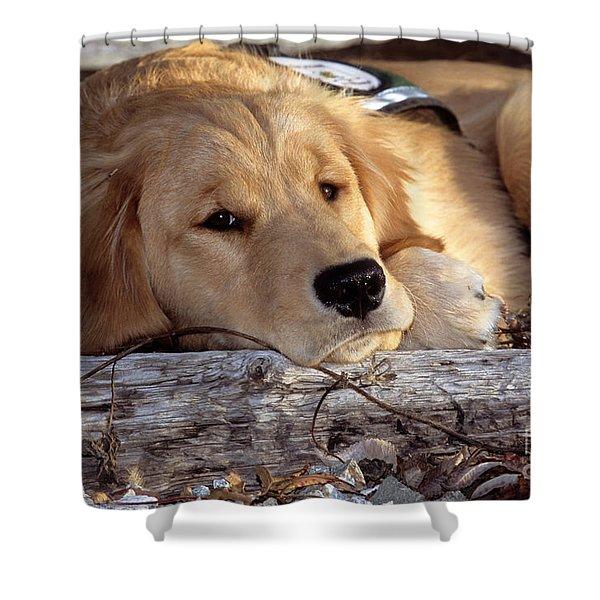 Golden Retriever Puppy Shower Curtain