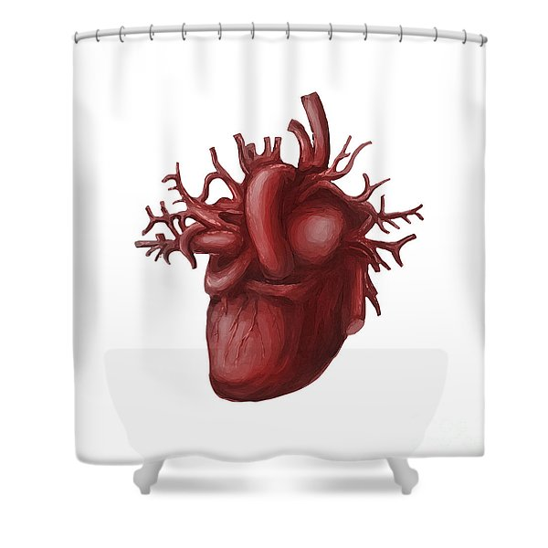 Human Heart Medical Diagram Isolated On White Shower Curtain