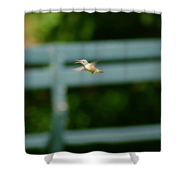 Hummer In Flight Shower Curtain