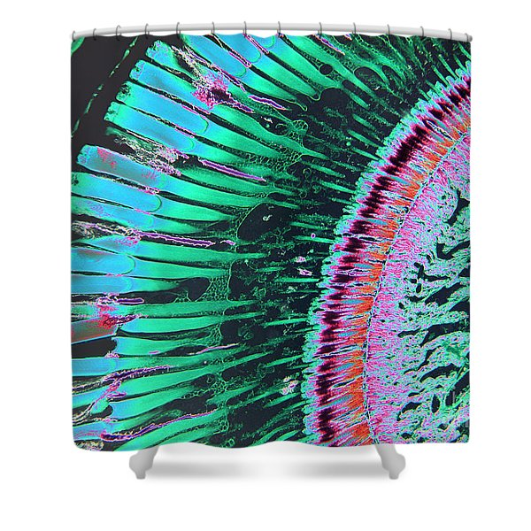 Insect Eye Shower Curtain