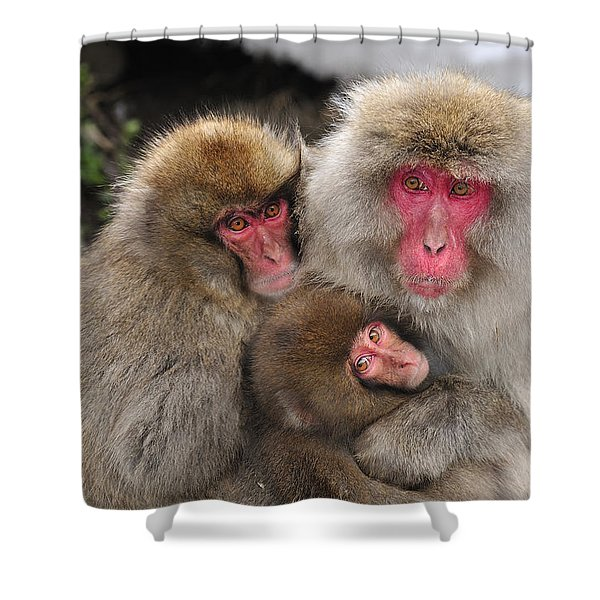 Japanese Macaque Mother With Young Shower Curtain