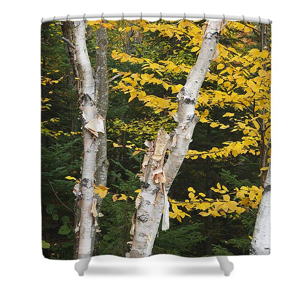 Shower Curtain featuring the photograph Kancamagus Highway - White Mountains New Hampshire by Erin Paul Donovan