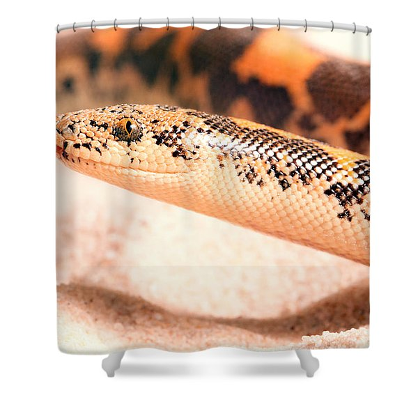 Kenyan Sand Boa Eryx Colubrinus Shower Curtain