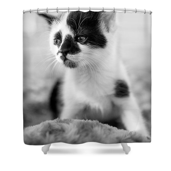 Kitten Dreaming Shower Curtain