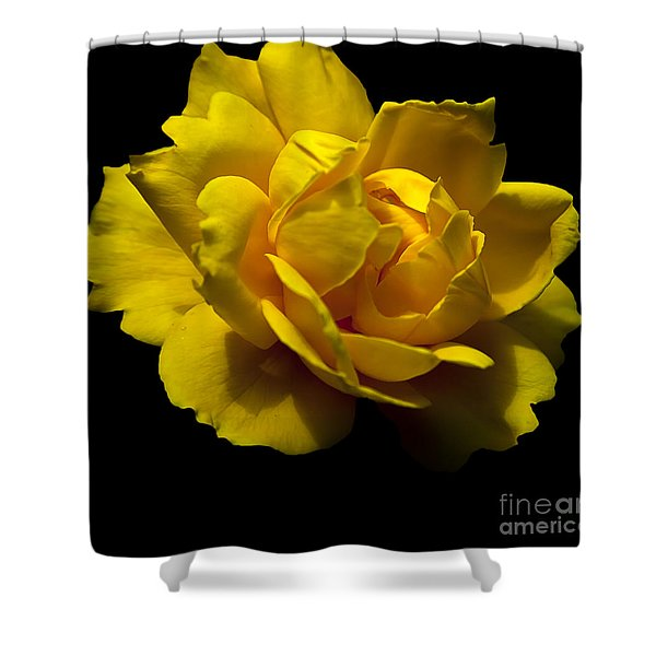Shower Curtain featuring the photograph Lemon Rose by David Millenheft