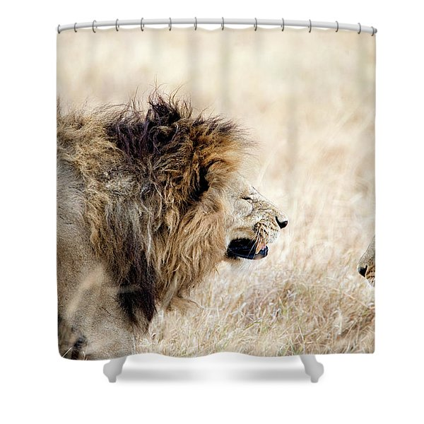 Lion And A Lioness Panthera Leo Shower Curtain