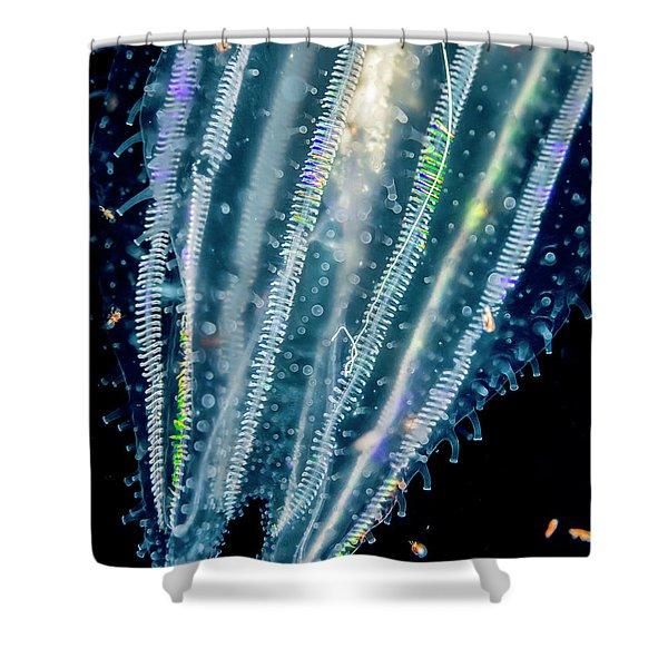 Lobate Ctenophore Or Comb Jelly Shower Curtain