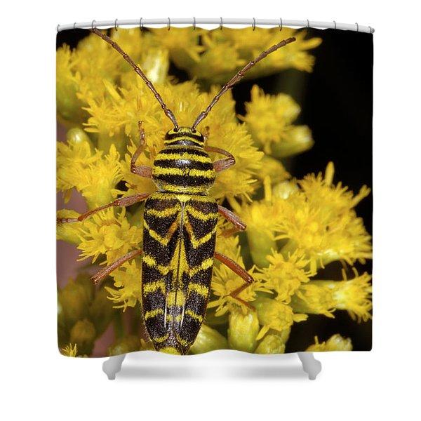 Locust Borer Beetle Shower Curtain