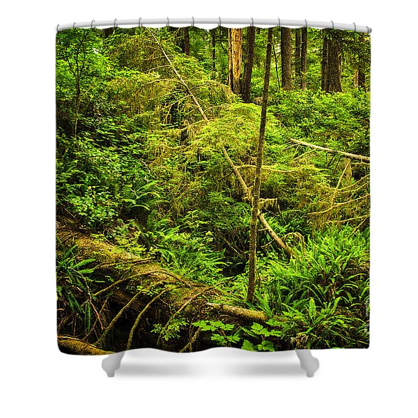 Lush Temperate Rainforest Shower Curtain
