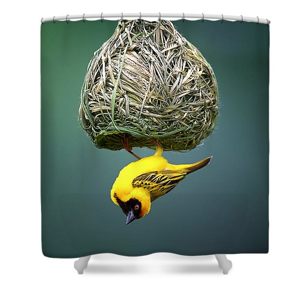 Masked Weaver At Nest Shower Curtain