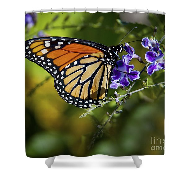Shower Curtain featuring the photograph Monarch Butterfly by David Millenheft