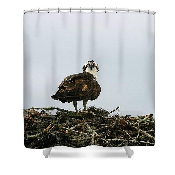 Osprey Nesting Shower Curtain