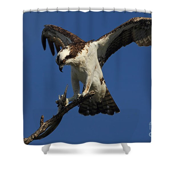 Osprey With A Fish Photo Shower Curtain