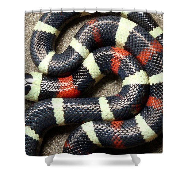 Pueblan Milk Snake L. Triangulum Shower Curtain