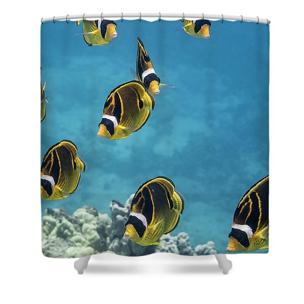 Racoon Butterflyfish  Chaetodon Lunula Shower Curtain