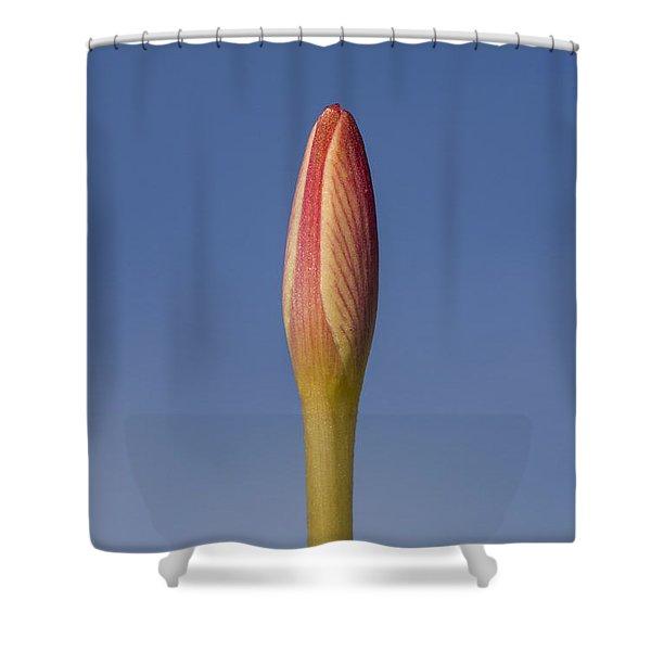 Rain-lily Bud Shower Curtain