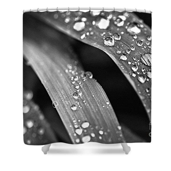 Raindrops On Grass Blades Shower Curtain