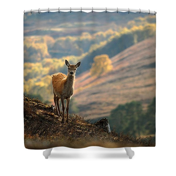 Red Deer Calf Shower Curtain