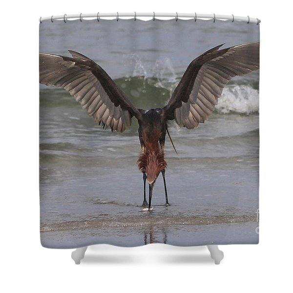 Reddish Egret Fishing Shower Curtain