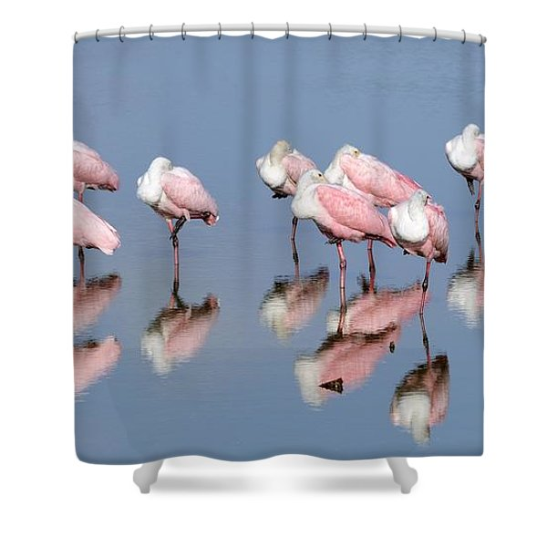 Roseate Spoonbills And Reflections Shower Curtain