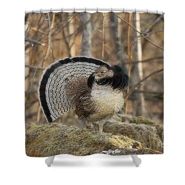 Ruffed Grouse Drumming Shower Curtain
