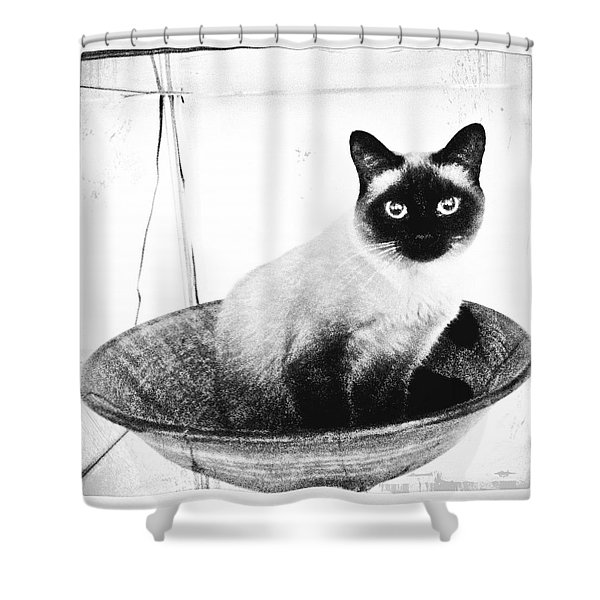 Siamese In A Bowl Shower Curtain
