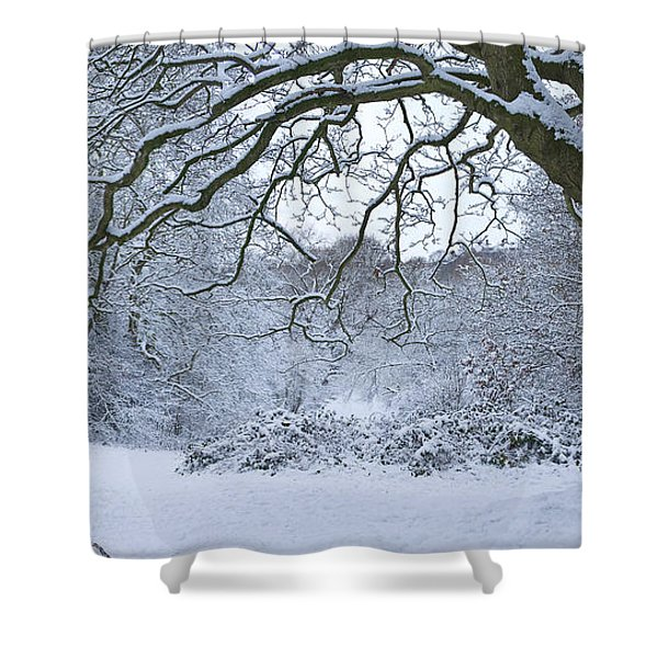 Snow Covered Trees In A Park, Hampstead Shower Curtain