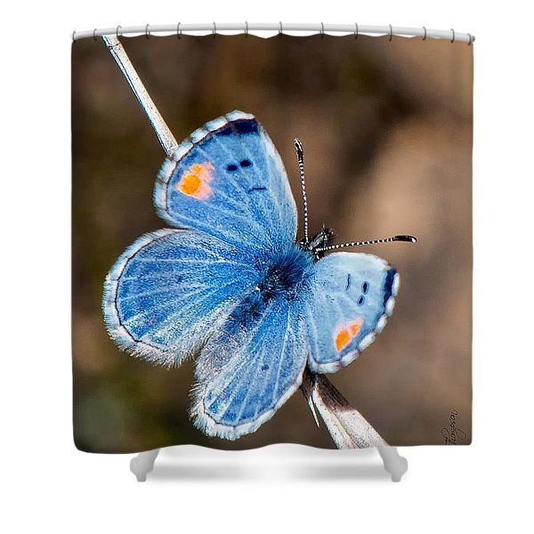 Shower Curtain featuring the photograph Sonoran Blue by Jim Thompson