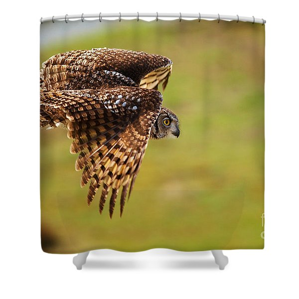 Spotted Eagle Owl In Flight Shower Curtain