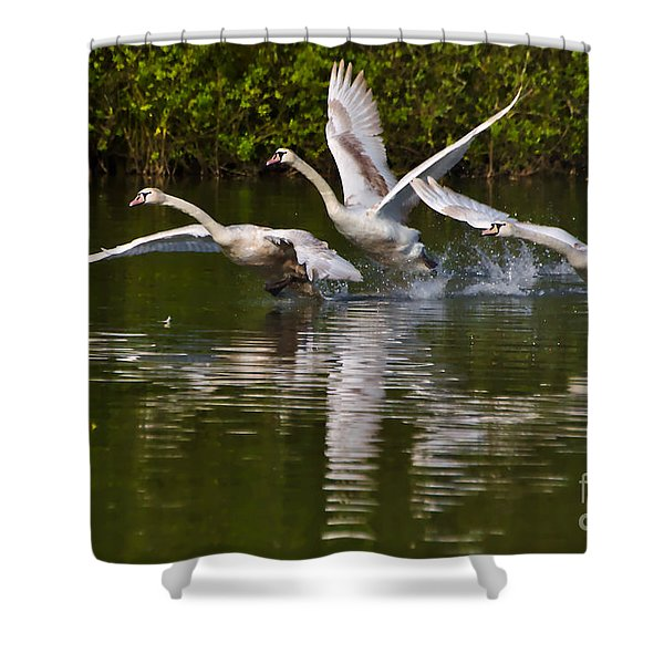 Swan Take-off Shower Curtain