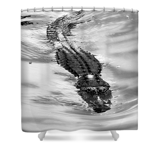 Swimming Gator Shower Curtain