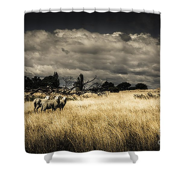 Tasmania Landscape Of An Outback Cattle Station Shower Curtain