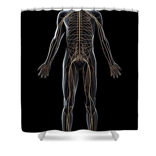 The Nerves Of The Body Shower Curtain