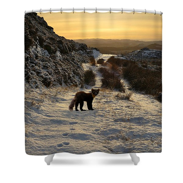 The Pine Marten's Path Shower Curtain