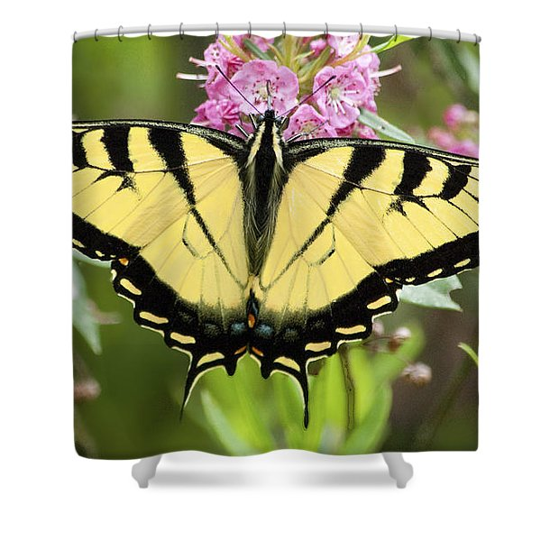 Tiger Swallowtail Butterfly On Milkweed Flowers Shower Curtain