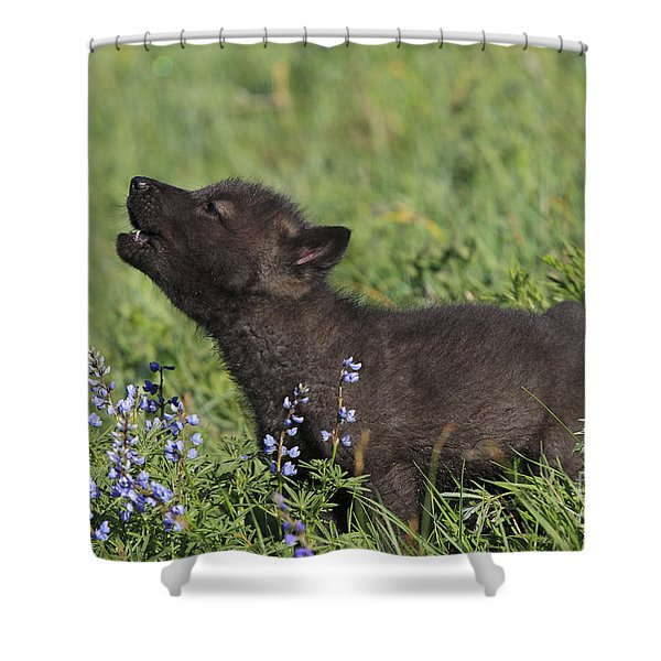 Timber Wolf Cub, Canis Lupus Shower Curtain