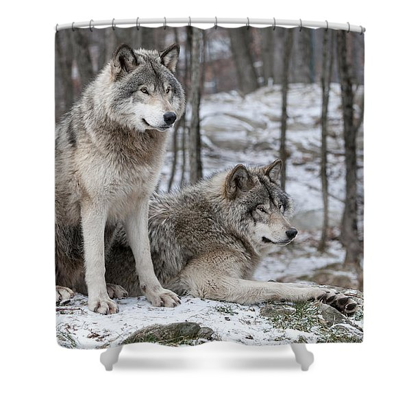 Timber Wolf Pair In Forest Shower Curtain