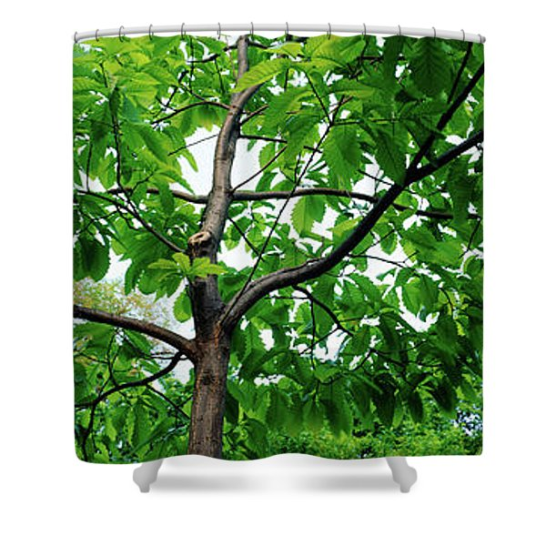 Trees In A Park, Adams Park, Wheaton Shower Curtain